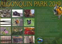 OUT OF STOCK/UNAVAILABLE Algonquin Park Calendar