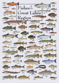 OUT OF STOCK/UNAVAILABLE Card, Fishes of the Great Lakes Region