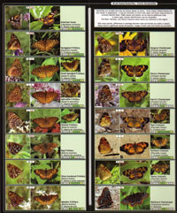 Butterflies of Southern and Eastern Ontario (and Southwestern Quebec)