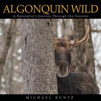 Algonquin Wild