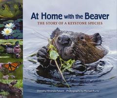 At Home with the Beaver