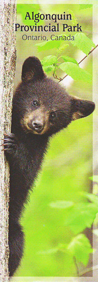 Bookmark - Black Bear Cub
