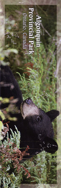 Bookmark - Black Bear
