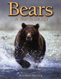Bears, A Year in the Life