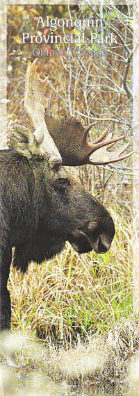 Bookmark - Bull Moose