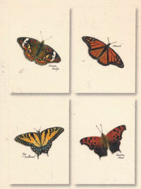 Butterfly Assortment Boxed Note Cards