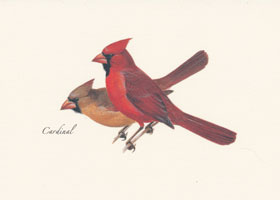 Cardinal Boxed Note Cards