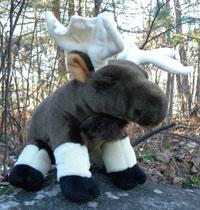Cuddlekins Moose Stuffie