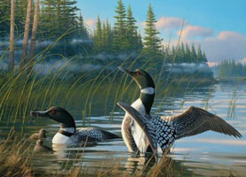 Common Loons 1000 Piece Puzzle