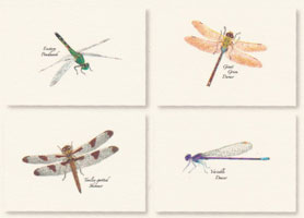 Dragonfly and Damselfly Boxed Note Cards