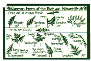 Ferns Laminated ID Card