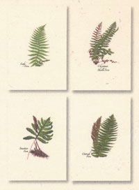 Fern Assorted Boxed Note Cards