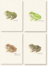 Frogs Boxed Note Cards