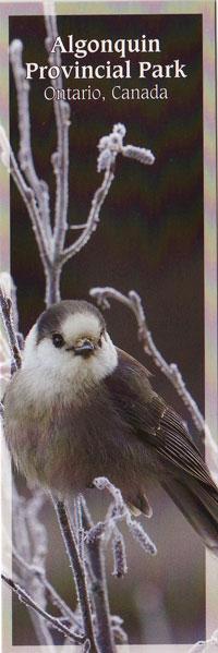 Bookmark - Gray Jay