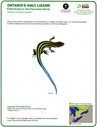 Ontario's Only Lizard Identifier Card
