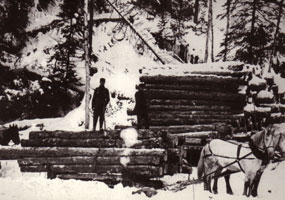 #54.  Early Logging in Algonquin