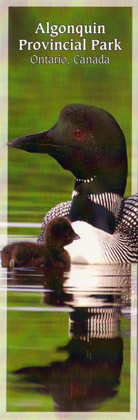 Bookmark - Common Loon