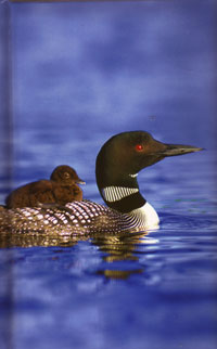Loons Lined Journal