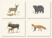 Mammals Boxed Note Cards