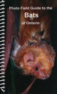 Photo Field Guide to the Bats of Ontario