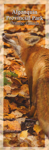 Bookmark - Red Fox