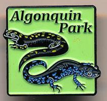 Lapel Pin Salamanders