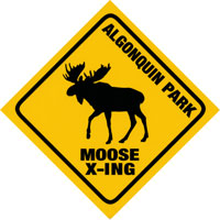 Moose Crossing Bumper Sticker