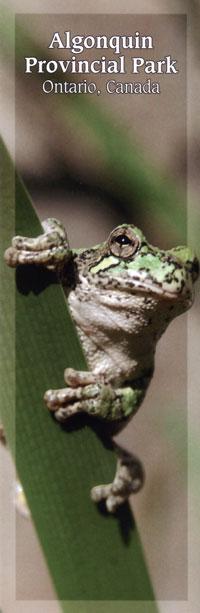Bookmark - Gray Treefrog