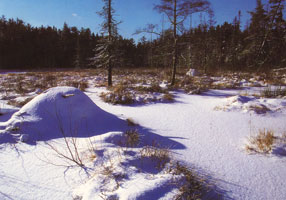 #21. Winter On An Algonquin Beaver Pond