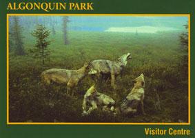 #7. Visitor Centre - Spruce Bog Diorama
